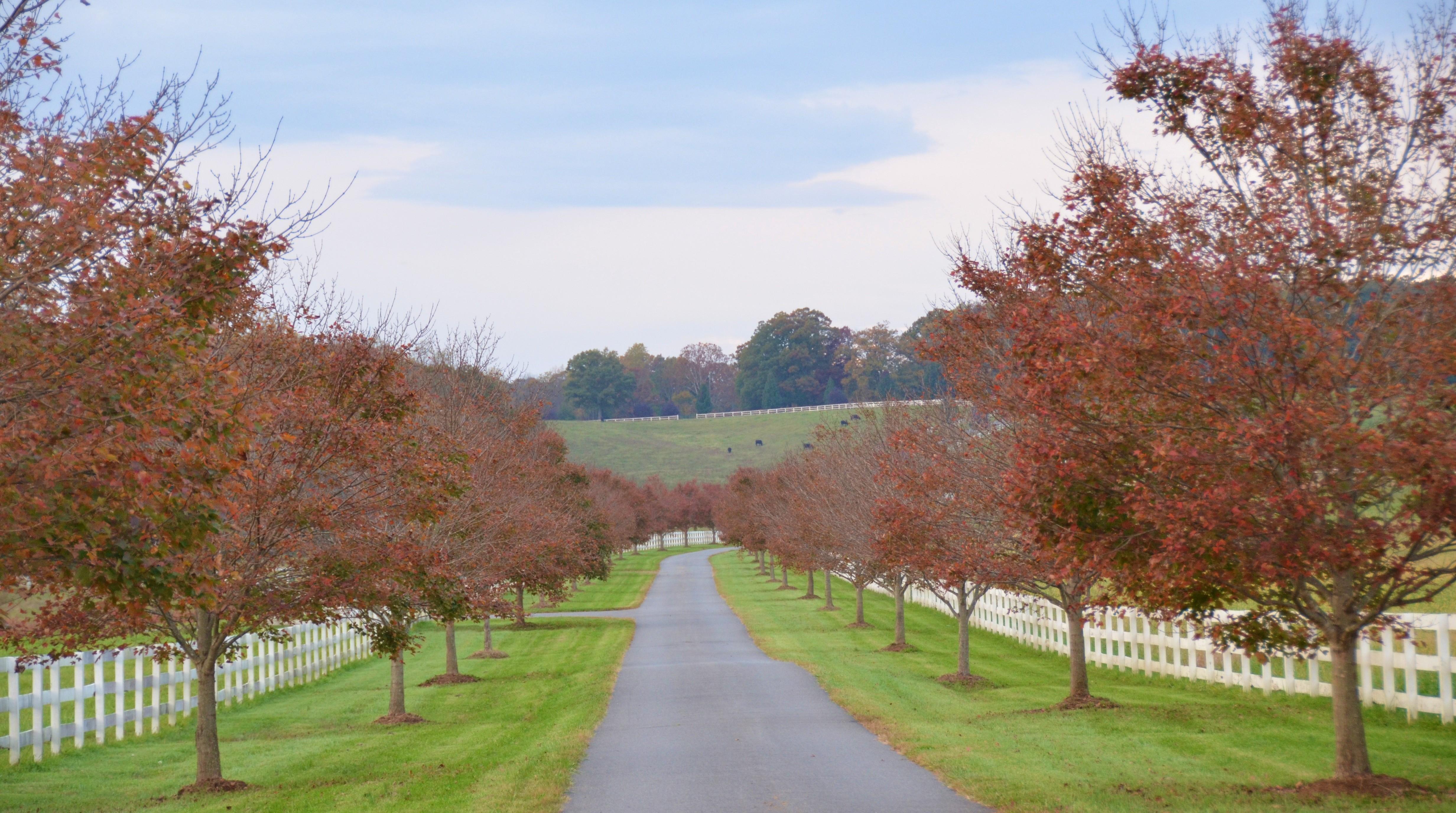 Mount Ida Farm Wedding Venues Charlottesville Va Private Events Virginia